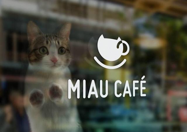 Miau Cafe wkrótce (640x452)