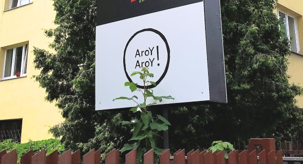 aroy-aroy-20160708